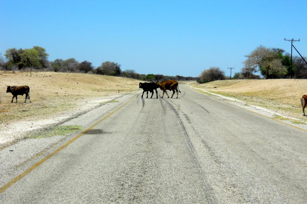 Hazards of the road in Botswana