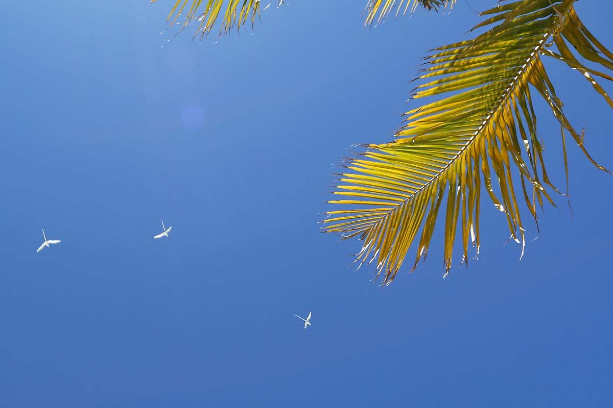 Paradise Sky Maldives