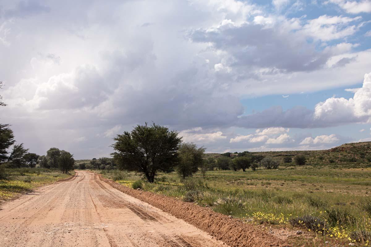Kgalagadi Green Kalahari